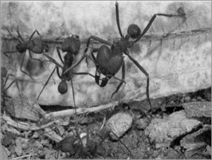 The Brazil the ants have made