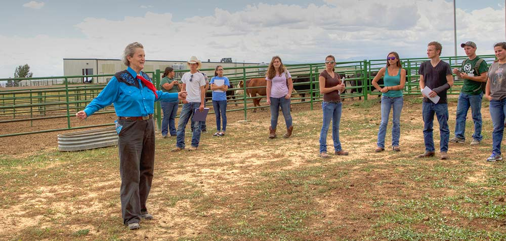 Prof. Temple Grandin holds the first day of her livestock handling class in the field. (Photo by Alison Bert)