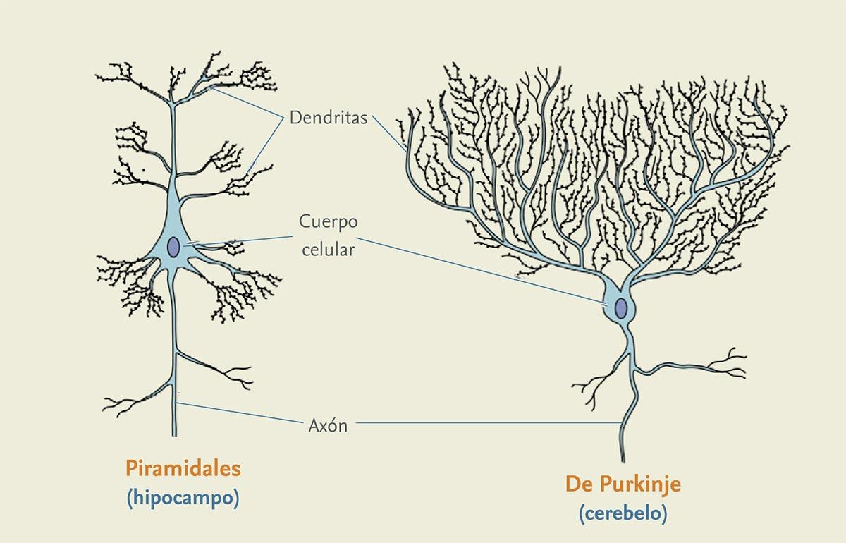 Principal-neuronas-23-enero-1.jpg