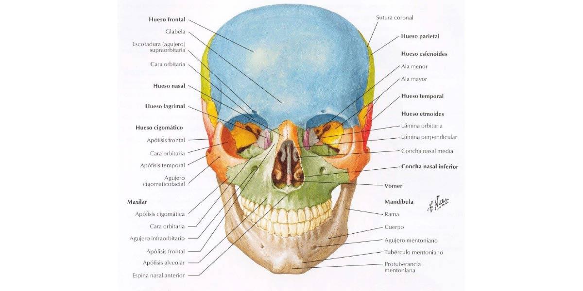 Anatomía y Elsevier: una perfecta simbiósis