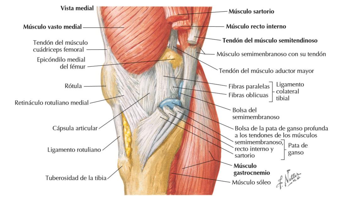 Lesiones de rodilla: hipótesis inicial basada en la anamnesis