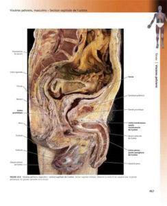 L'anatomie_5