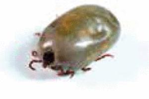 La Maladie de Lyme dans l'actualité et dans em-consulte