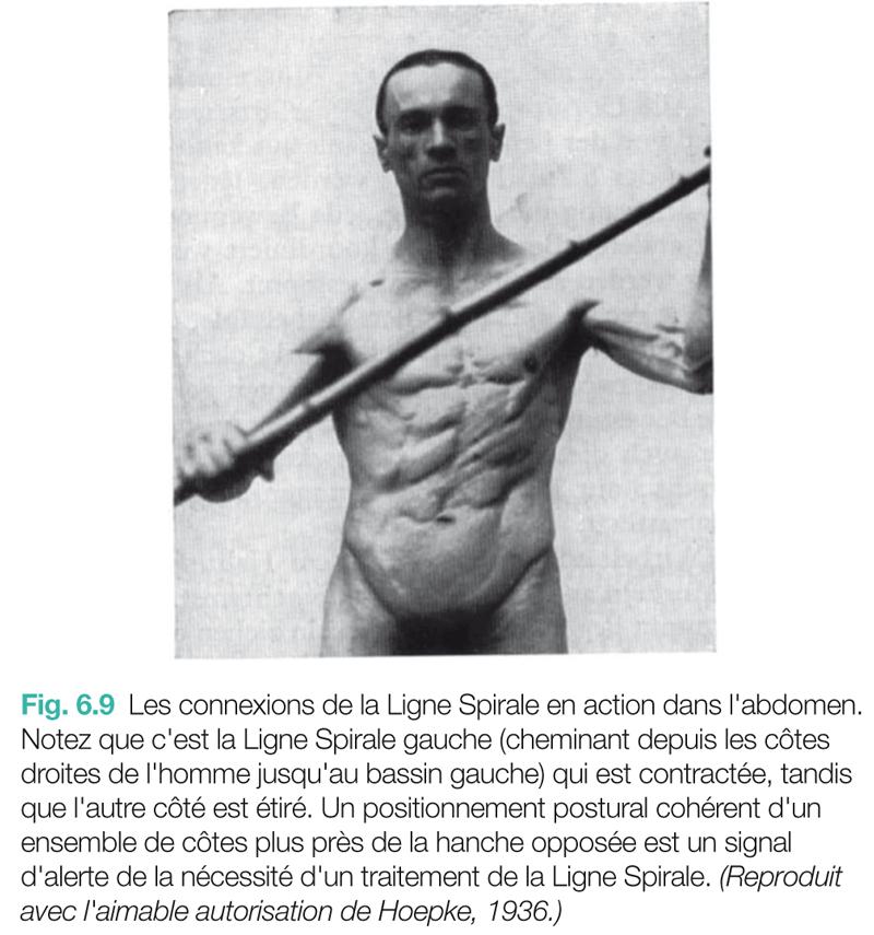 Fig. 6.9 Les connexions de la Ligne Spirale en action dans l'abdomen