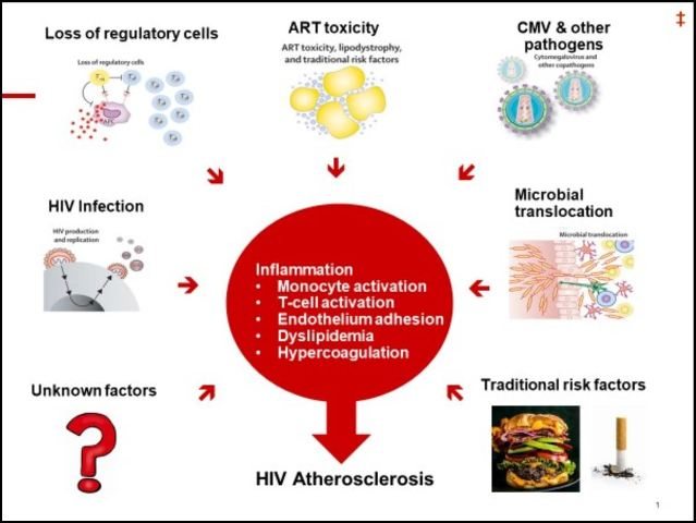 Infographic showing the various mechanisms leading to atherosclerotic cardiovascular disease with human immunodeficiency virus (HIV) infection.