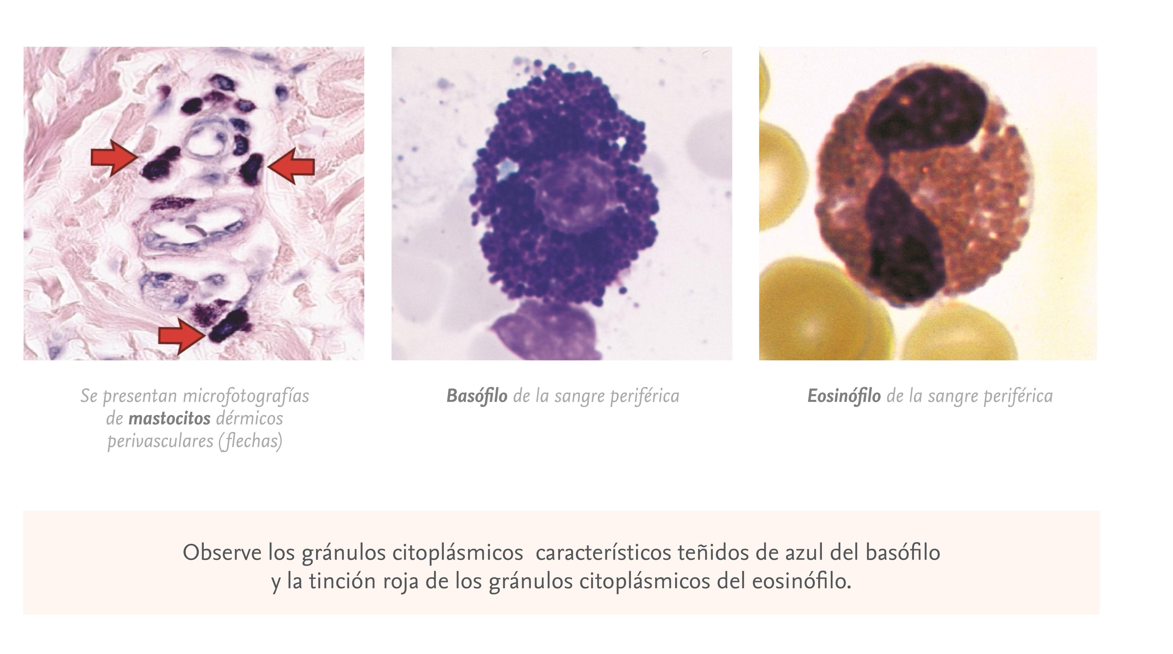 Celulas-alergia.jpg