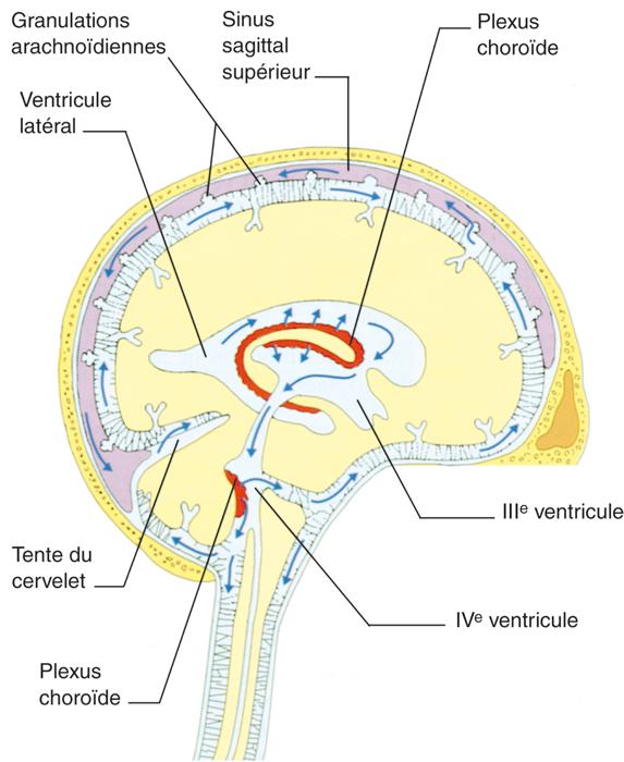 neurophysiologie LCR