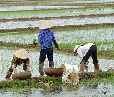 Female workers planting rice (Photo © Guenter Guni via iStock)