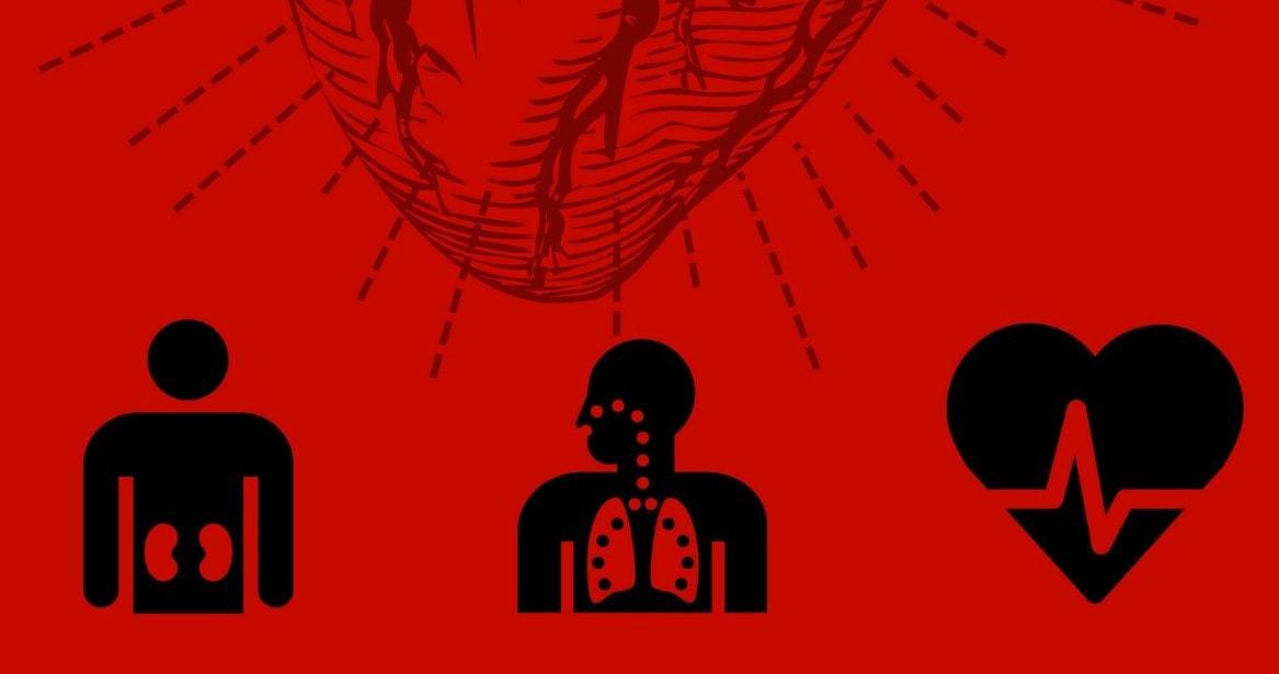 Pesos y medidas de los órganos del cuerpo humano