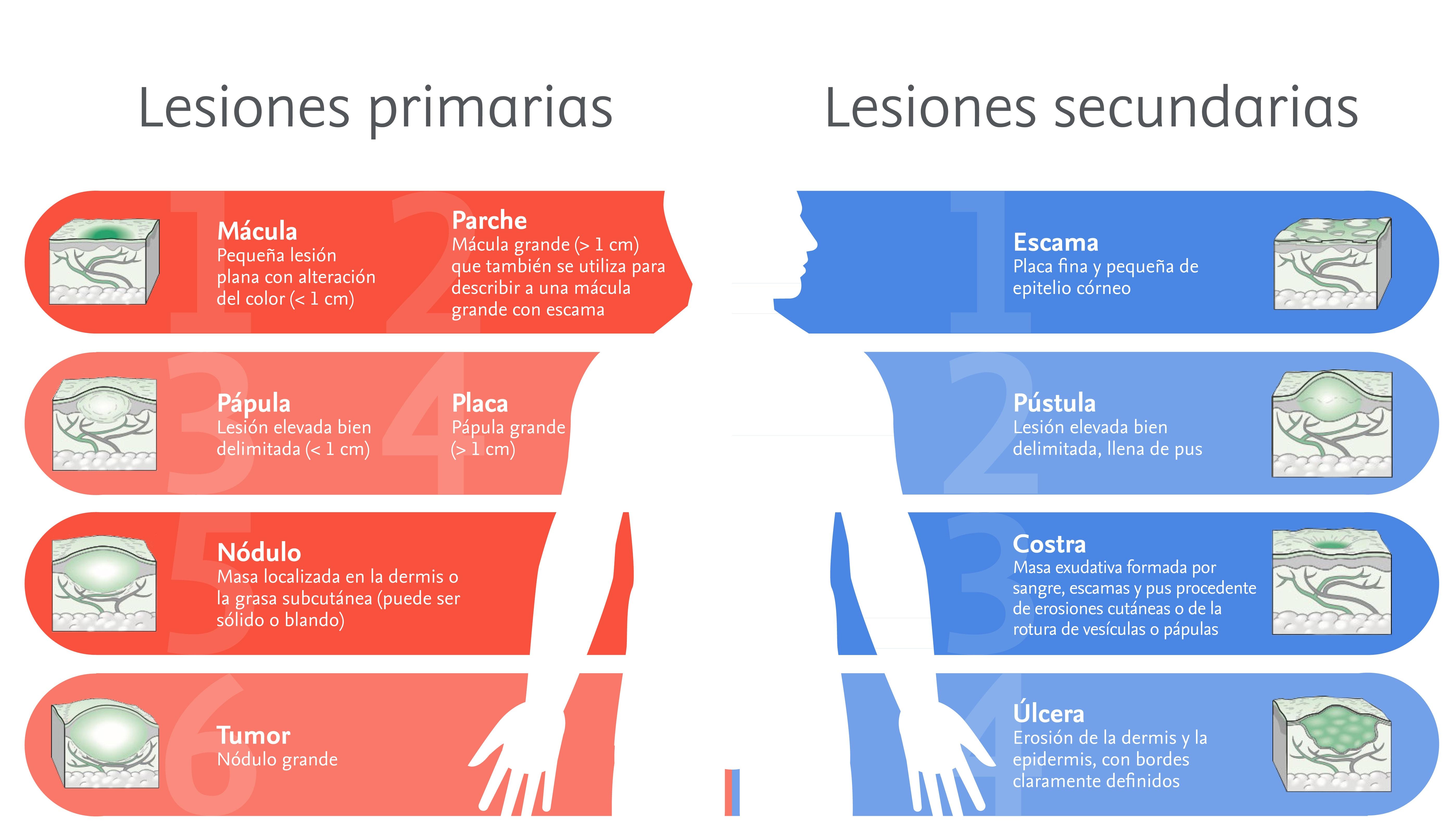 Lesiones cutáneas primarias y secundarias