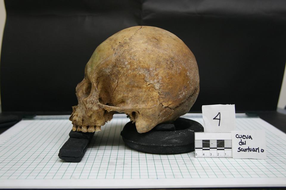 Forensic-Anthropology-Elsevier.jpg