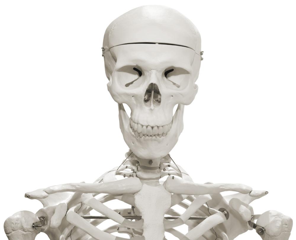 3 Dinge, die während des Anatomiekurses hilfreich sind