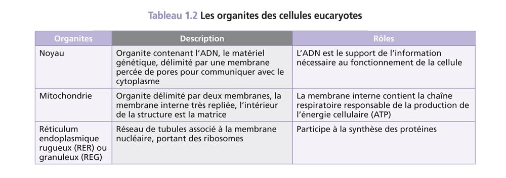 Bac ST2S Organisation et fonctionnement de l'être humain_7
