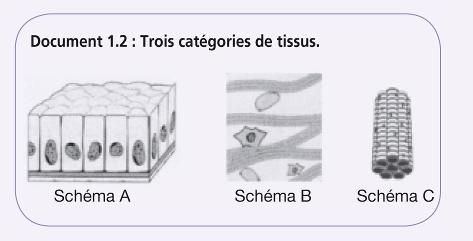 Bac ST2S Organisation et fonctionnement de l'être humain_12