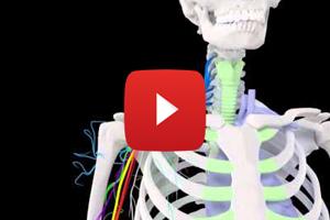 Fini les crises de nerfs pour apprendre l'anatomie