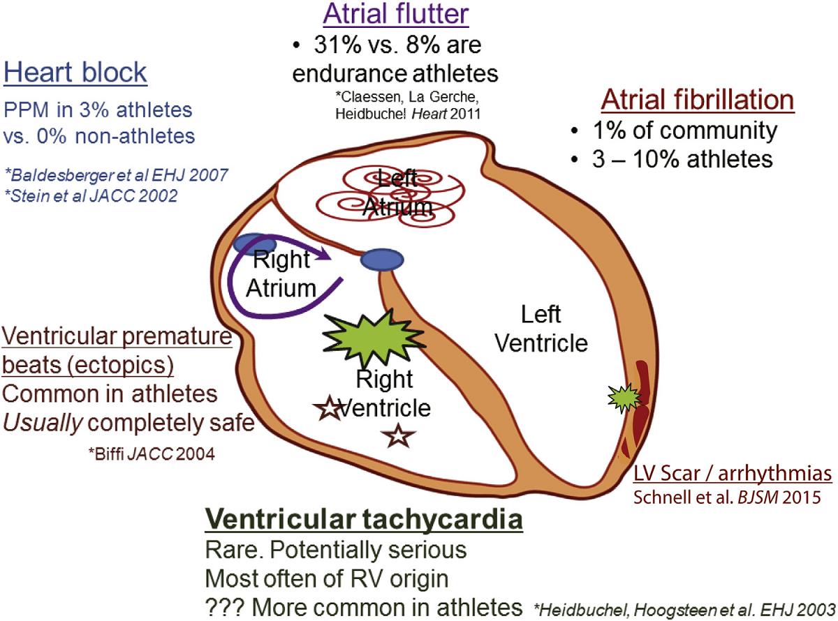 CJC exercise heart
