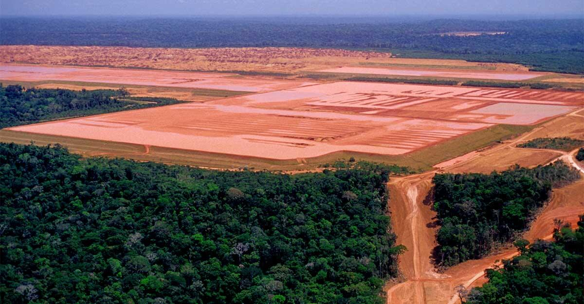 the paradox of conservation and deforestation