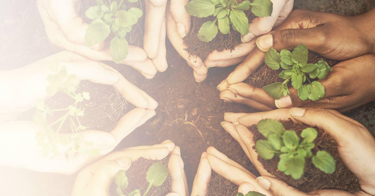 Healthier-soil.jpg