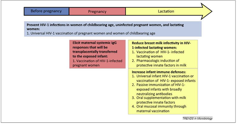 Timing of potential immune-based interventions to prevent postnatal HIV-1 infections (Source: Fouda et al, Trends in Microbiology)
