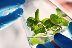 Ebook: Leading in green & sustainable chemistry - Green Chemistry, Chemicals | Elsevier R&D Solutions