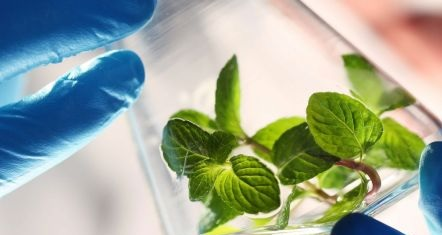 Leading in green & sustainable chemistry - Chemicals & Materials  Elsevier R&D Solutions