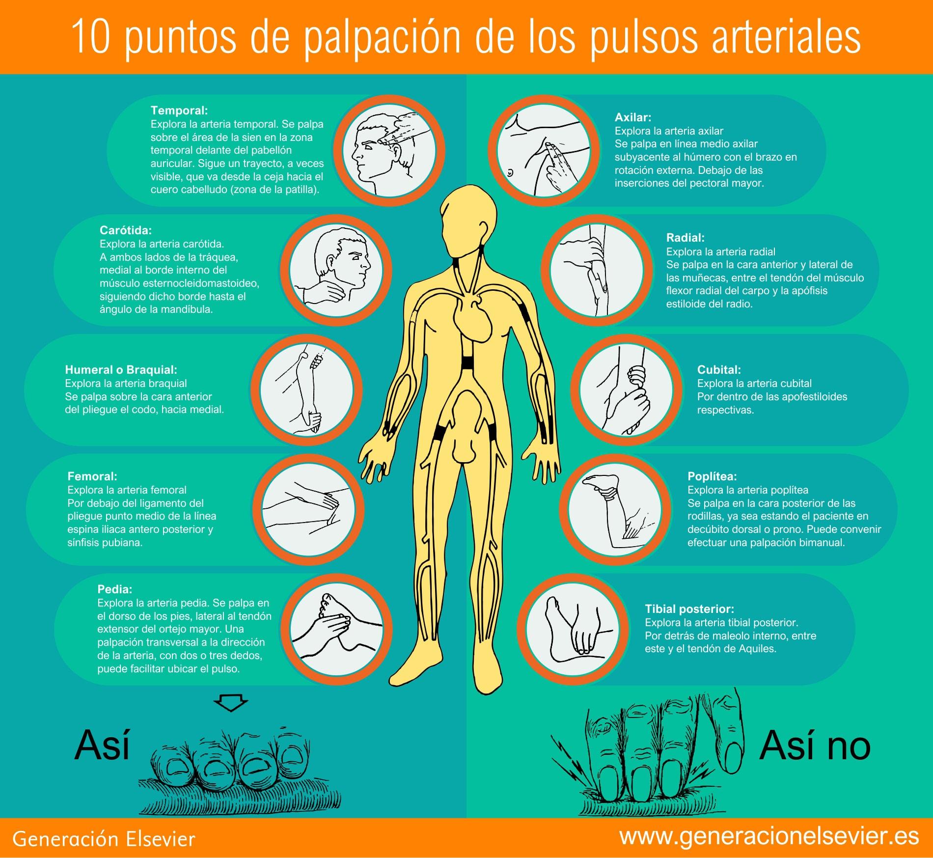 Infografia-Pulso-V2.jpg