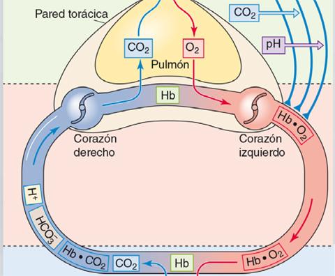 Infografia-Aparato-respiratorio-principal-1.jpg