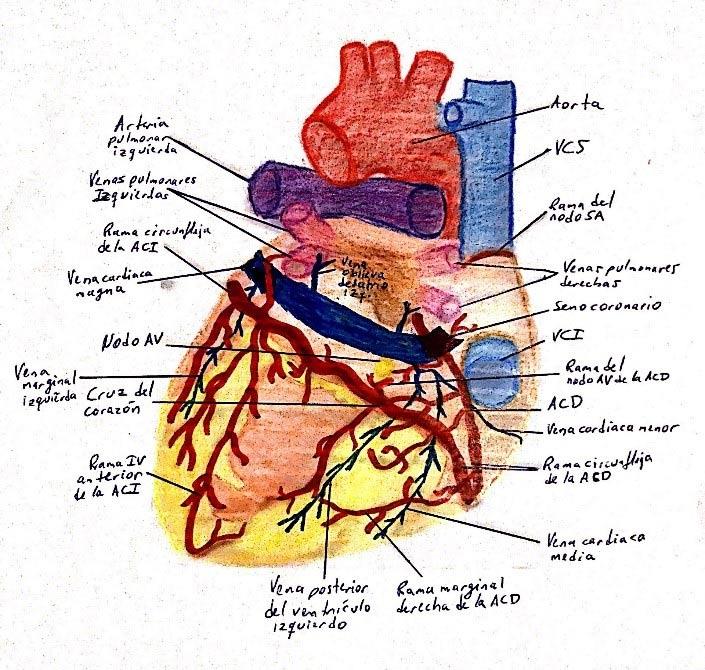 prevencion-cardio.jpg