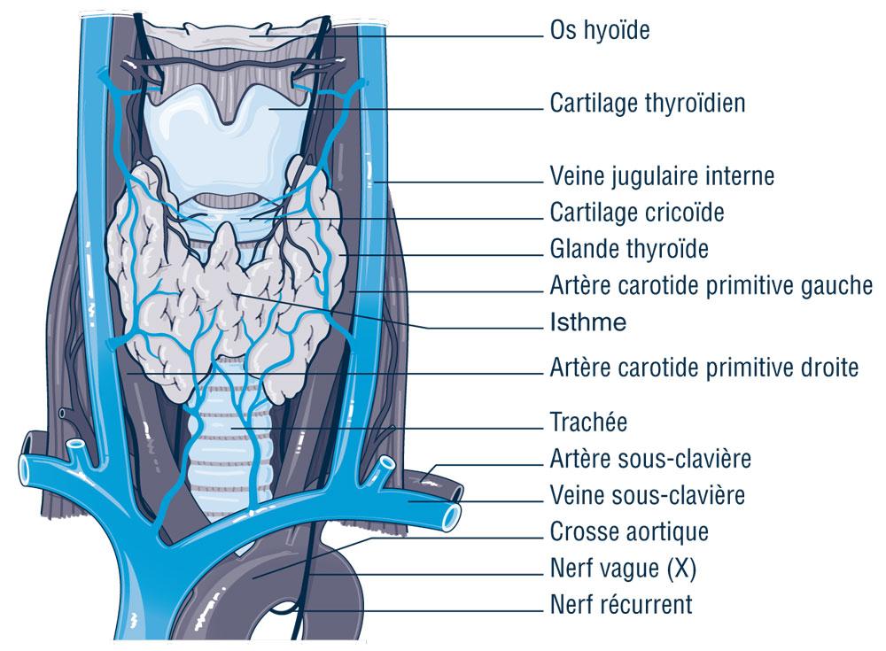 Prise en charge d'un patient adulte opéré de la thyroïde de J−1 à J3_1