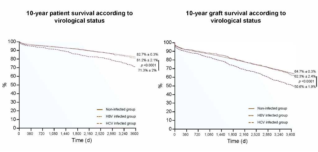 Two side-by-side line graphs showing the percentage of the 10-year patient survival (left) and 10-year graft survival (right) in patients in the three groups: HBV-infected, HCV-infected, and non-infected over time