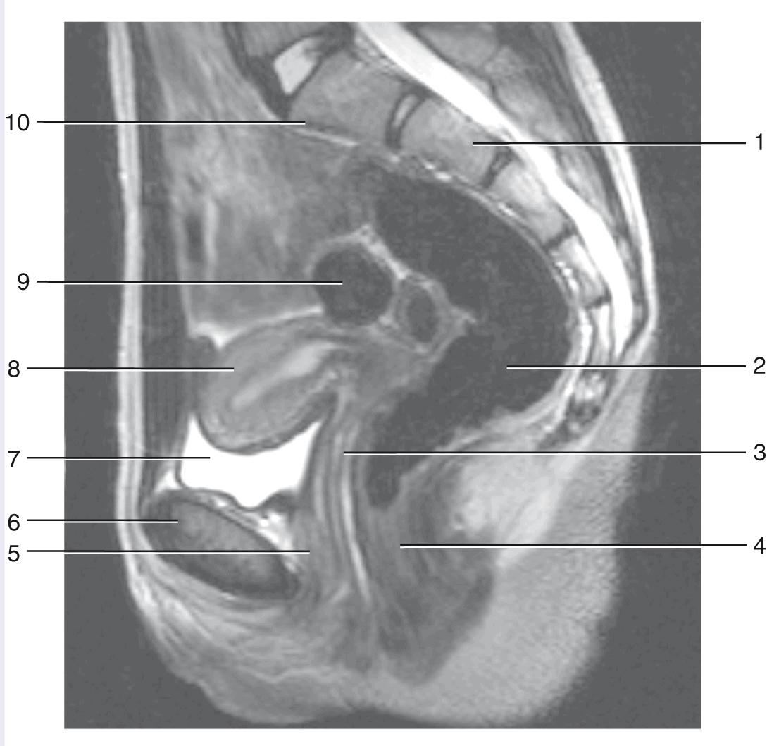 la révision anatomie études medecine GRAY s