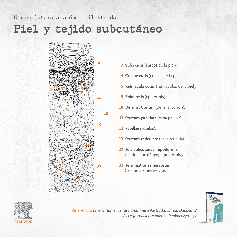 Nomenclatura anatómica ilustrada: piel y tejido subcutáneo