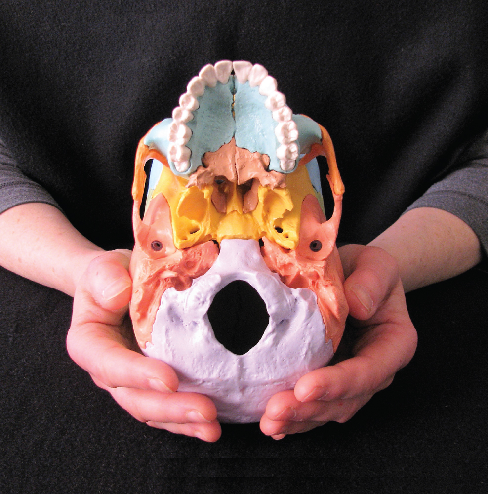 L'ostéopathie crânienne en pratique_4