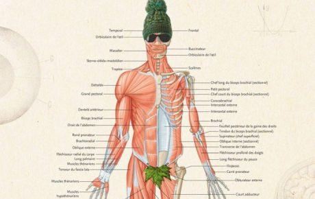 Rentrée étudiante 2017 : un poster d'anatomie offert pour tout achat catégorie étudiant