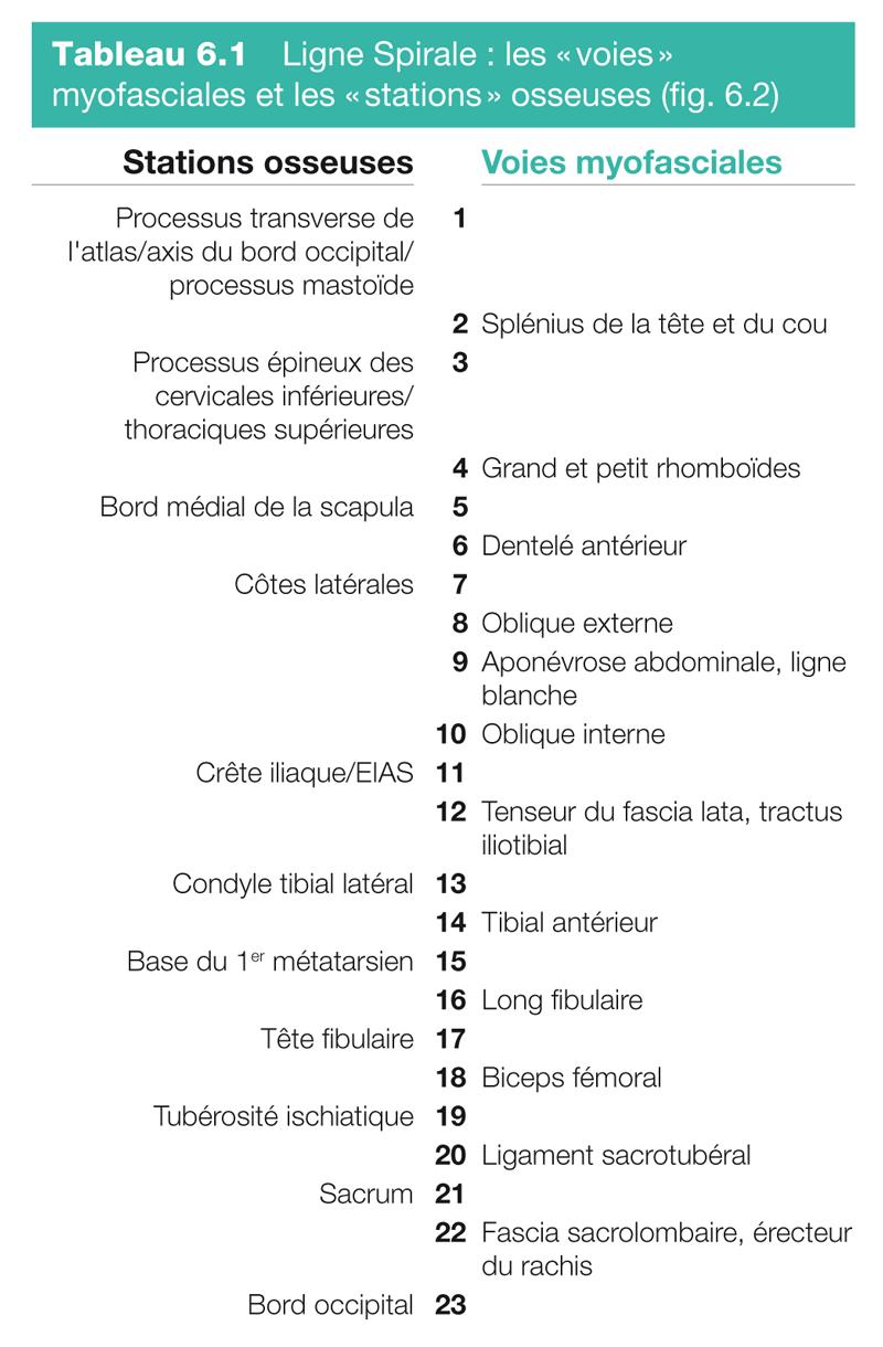 Tableau 6.1 Ligne Spirale : les « voies » myofasciales et les « stations » osseuses ( fig. 6.2 )