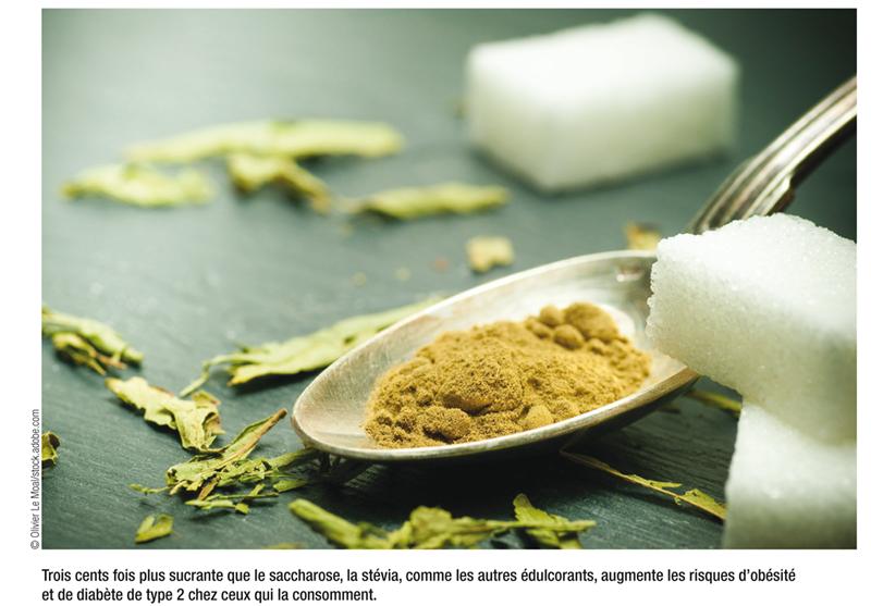 Trois cents fois plus sucrante que le saccharose, la stévia, comme les autres édulcorants, augmente les risques d'obésité et de diabète de type 2 chez ceux qui la consomment.