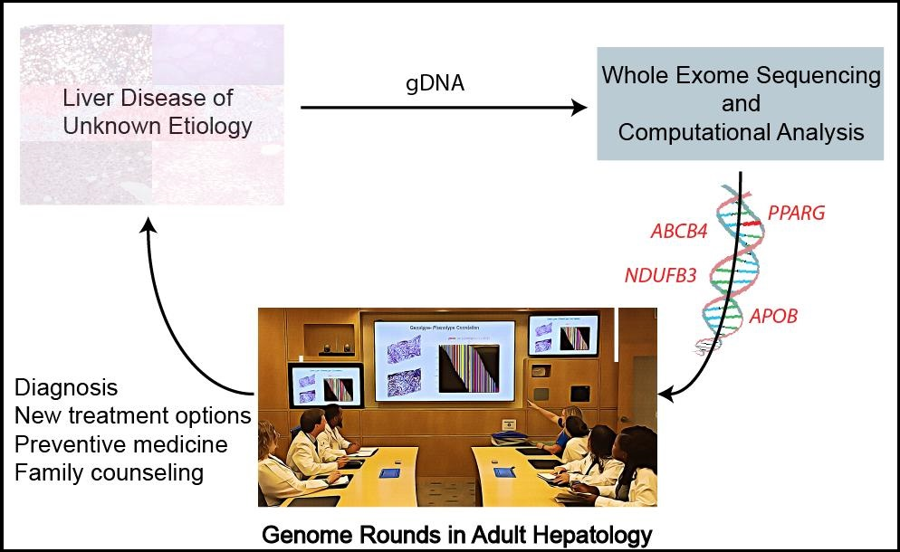 Illustration showing the effect of whole exome sequencing on adults with liver disease of unknown causes and the potential clinical value of genome rounds in the individual assessment and medical care of patients.