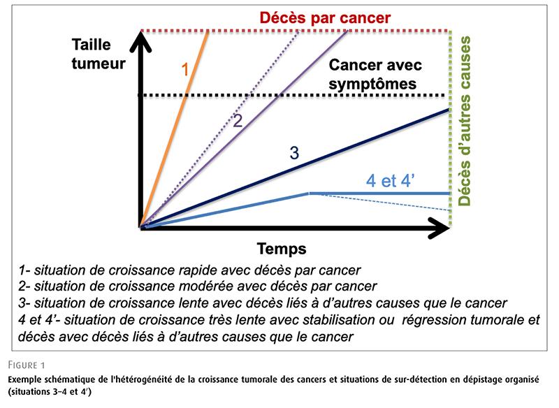 Exemple schématique de l'hétérogénéité de la croissance tumorale des cancers et situations de sur-détection en dépistage organisé (situations 3–4 et 40 )