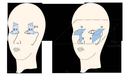 Figure 16.2 (a) Plans principaux des trois canaux semi-circulaires, qui sont disposés de manière à pouvoir détecter tous les mouvements angulaires de la tête. (b) Épithélium sensoriel de l'utricule (u) et du saccule (s), qui sont disposés dans les plans horizontal et vertical pour détecter les accélérations linéaires telles que la gravité.