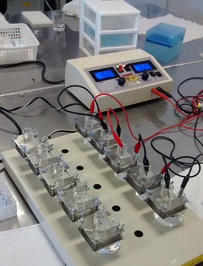 The researchers tested iontophoresis — the application of a tiny electric current — as a method to administer anesthetic. This photo shows the equipment they used for the iontophoresis. (Photo courtesy of corresponding author Renata Lopez)