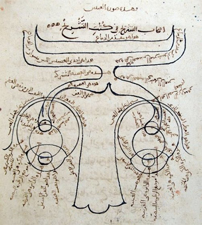 Ibn al-Haytham's sketch of the human optical system. The oldest known drawing of the nervous system from Kitab al-Manazir of Ibn al-Haytham (from a manuscript held in the Süleymaniye Library, Istanbul), in which the eyes and optic nerves are illustrated. It shows a large nose at the bottom, eyes on both side and a hollow optic nerve that flows out of each one towards the back of the brain. (Source: <a href=&quot;http://www.muslimheritage.com/article/reflections-optics-time&quot;>Reflections on the Optics of Time</a>  &copy; Muslim Heritage)