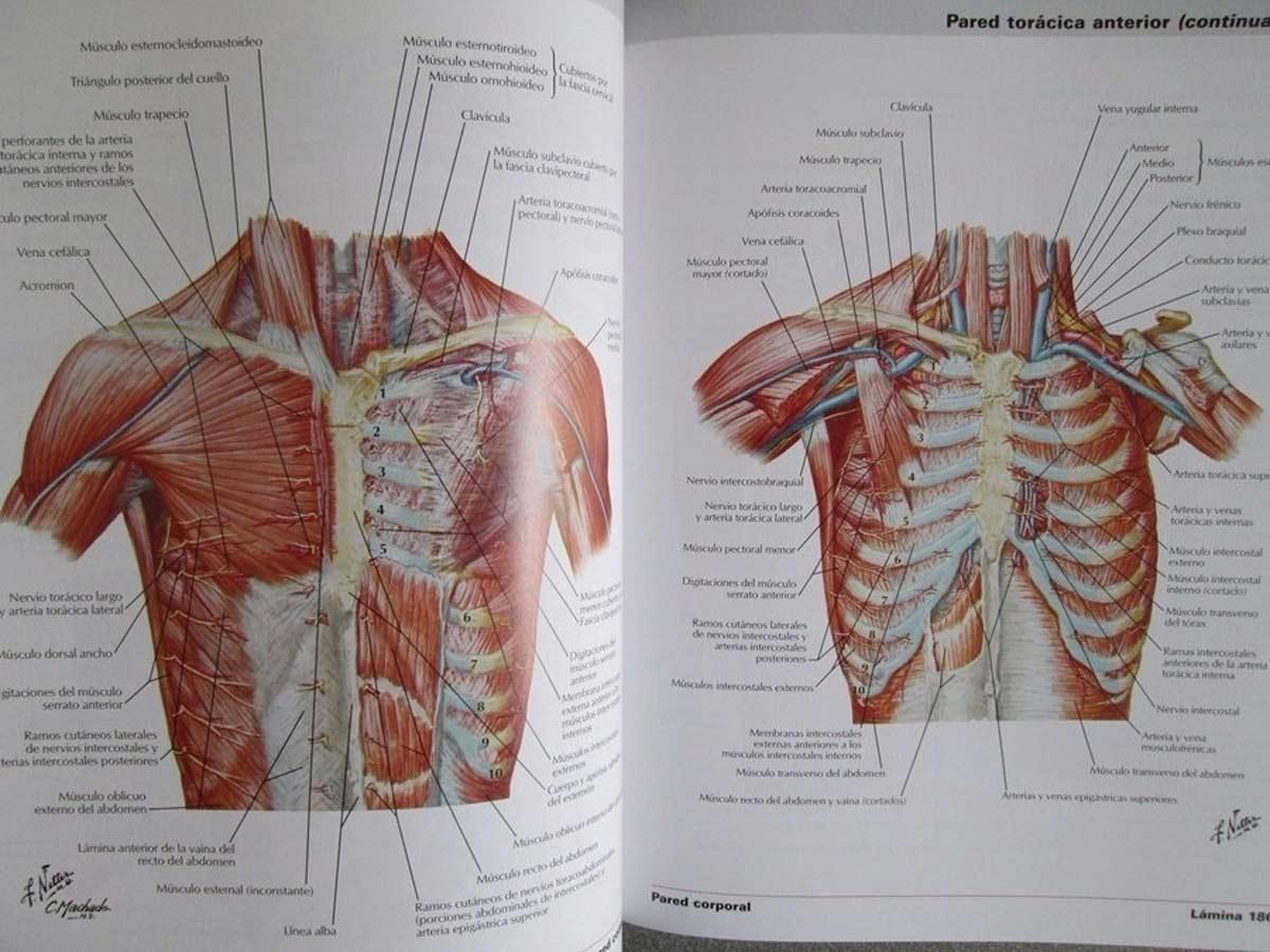 netter-atlas-de-anatomia-humana-6ta-edicion-elsevier-D_NQ_NP_829501-MCO20367638854_082015-F.jpg