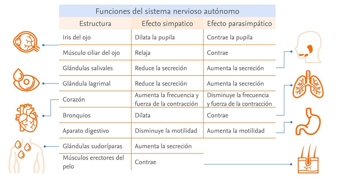 Funciones-SNA-infografia.jpg