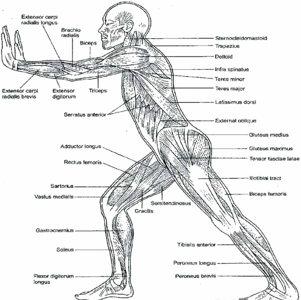 'Cuaderno de anatomía para colorear', un modelo de aprendizaje activo