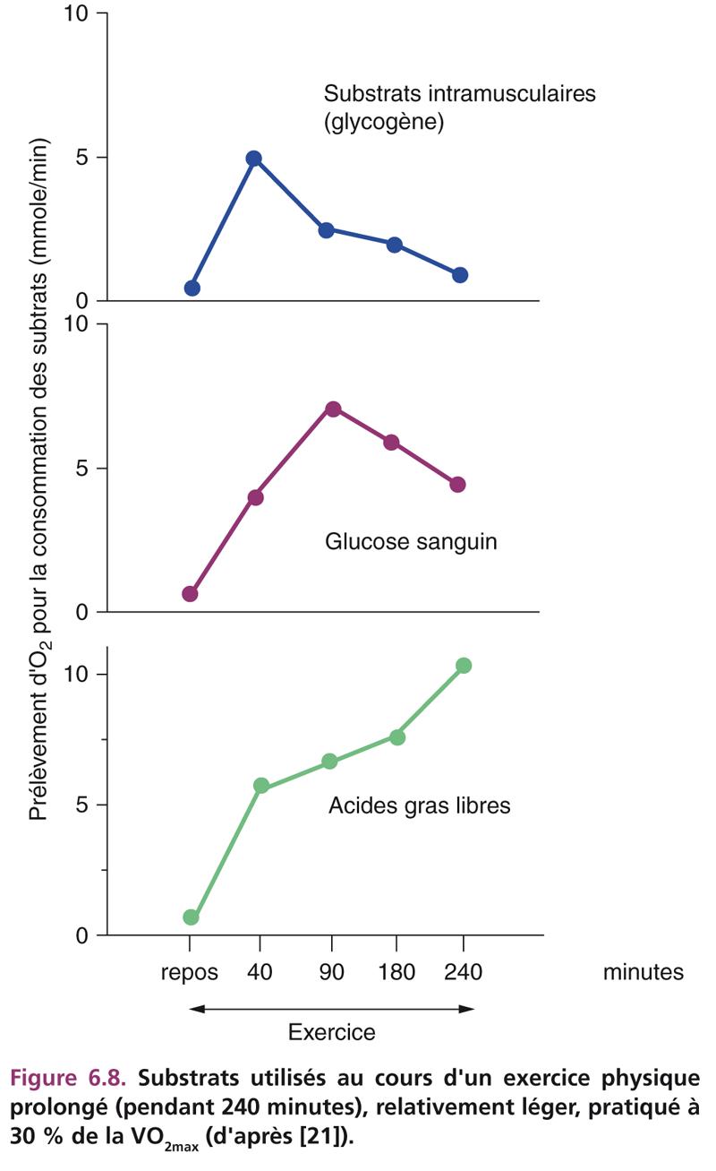 Figure 6.8. Substrats utilisés au cours d'un exercice physique prolongé (pendant 240 minutes), relativement léger, pratiqué à 30 % de la VO2max (d'après [21]).