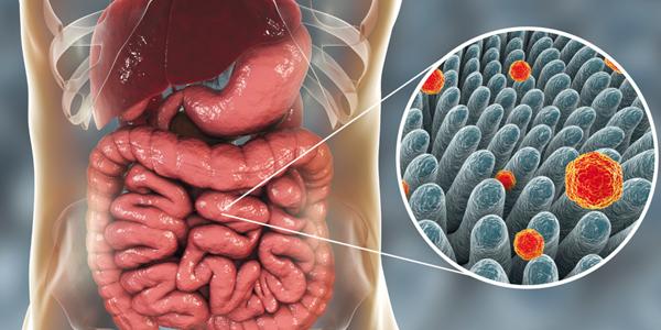 Virus et environnement : les hépatites A et E