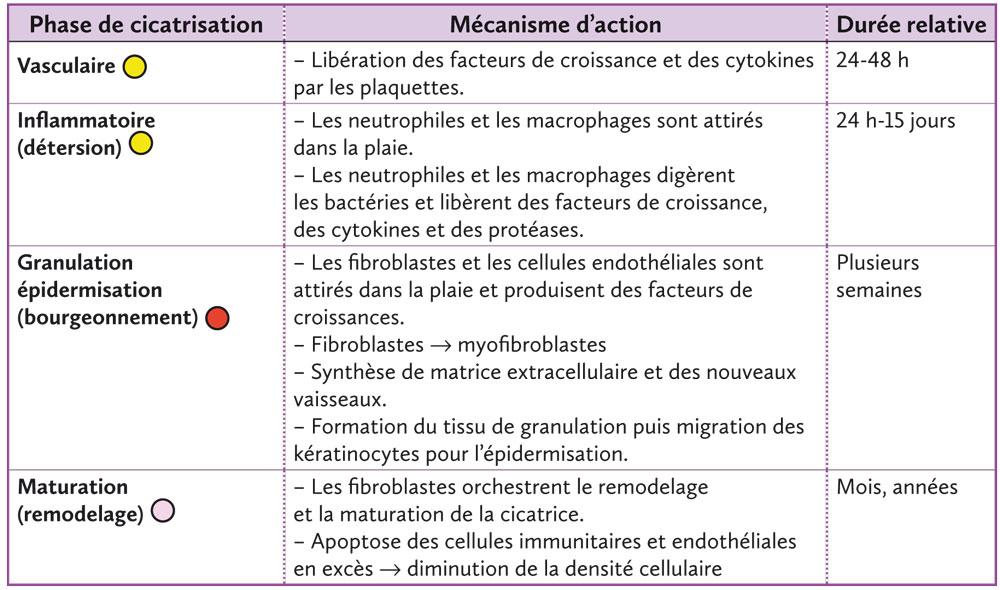 Libération des facteurs de croissance et des cytokines par les plaquettes.