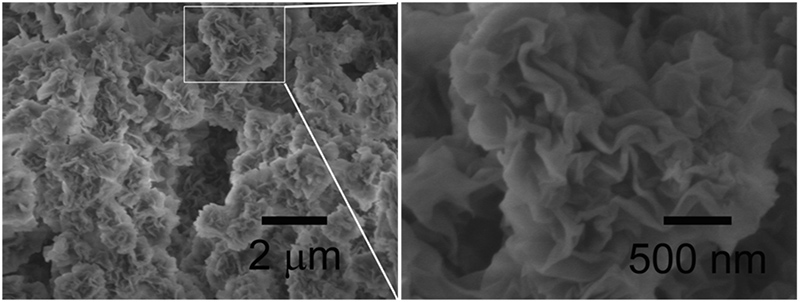 Scanning Electron Micrograph (SEM) images of self-curled coral-like nanoplates &ndash; image on the right is enlarged. (Source: Xianbiao Wang et al:  <em>Journal of Colloid and Interface Science </em>)