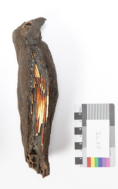 The mummified kestrel SACHM 2575. (© Iziko Museums, Photo by Carina Beyer)