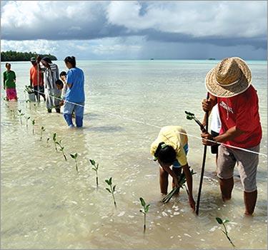 planting of mangrove seedlings featured